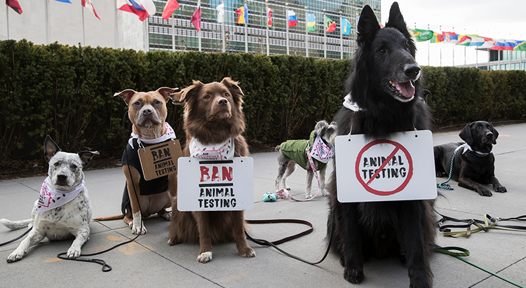 an argument against animal testing in united states as wastage of dollars and animal lives Animal testing labs or circuses even the humane society of the united states argues that we should keep our pets arguments against pet ownership.